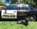 Peña Adobe Welcomes The Vacaville Police Department K-9 Unit