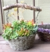 Hypertufa Basket With Succulents