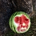 Watermelon Sculpting Demonstration With Jordan Hockett